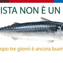 Turismo e formazione in Italia, nuove professionalità e nuovi prodotti turistici
