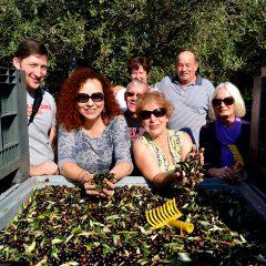 raccolta-olive-turismo